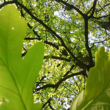 Lasy w obiektywie