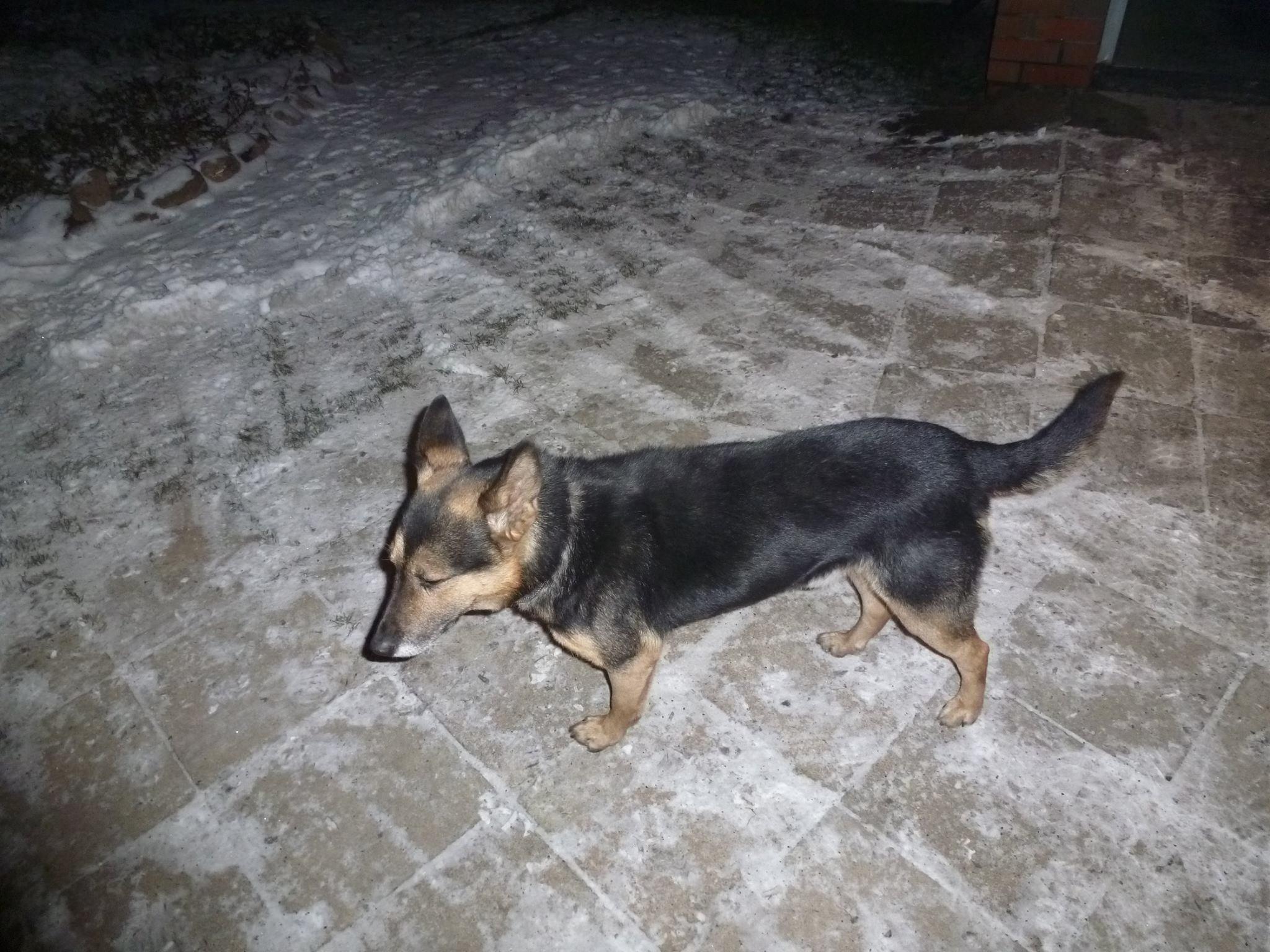 Uratowany pies odnalazł właściciela